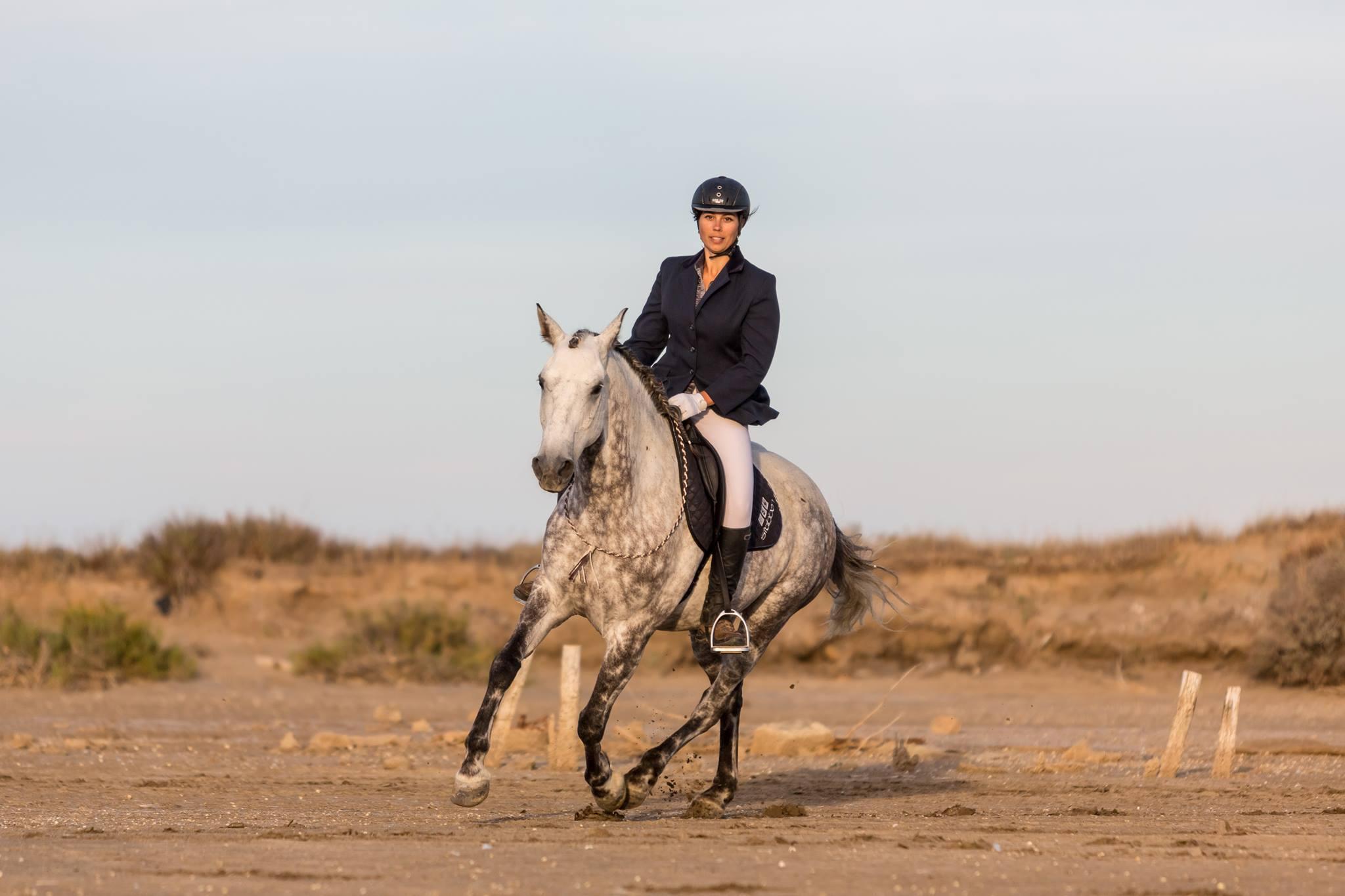 Les 4 SAVVYS du programme Parelli Natural Horsemanship
