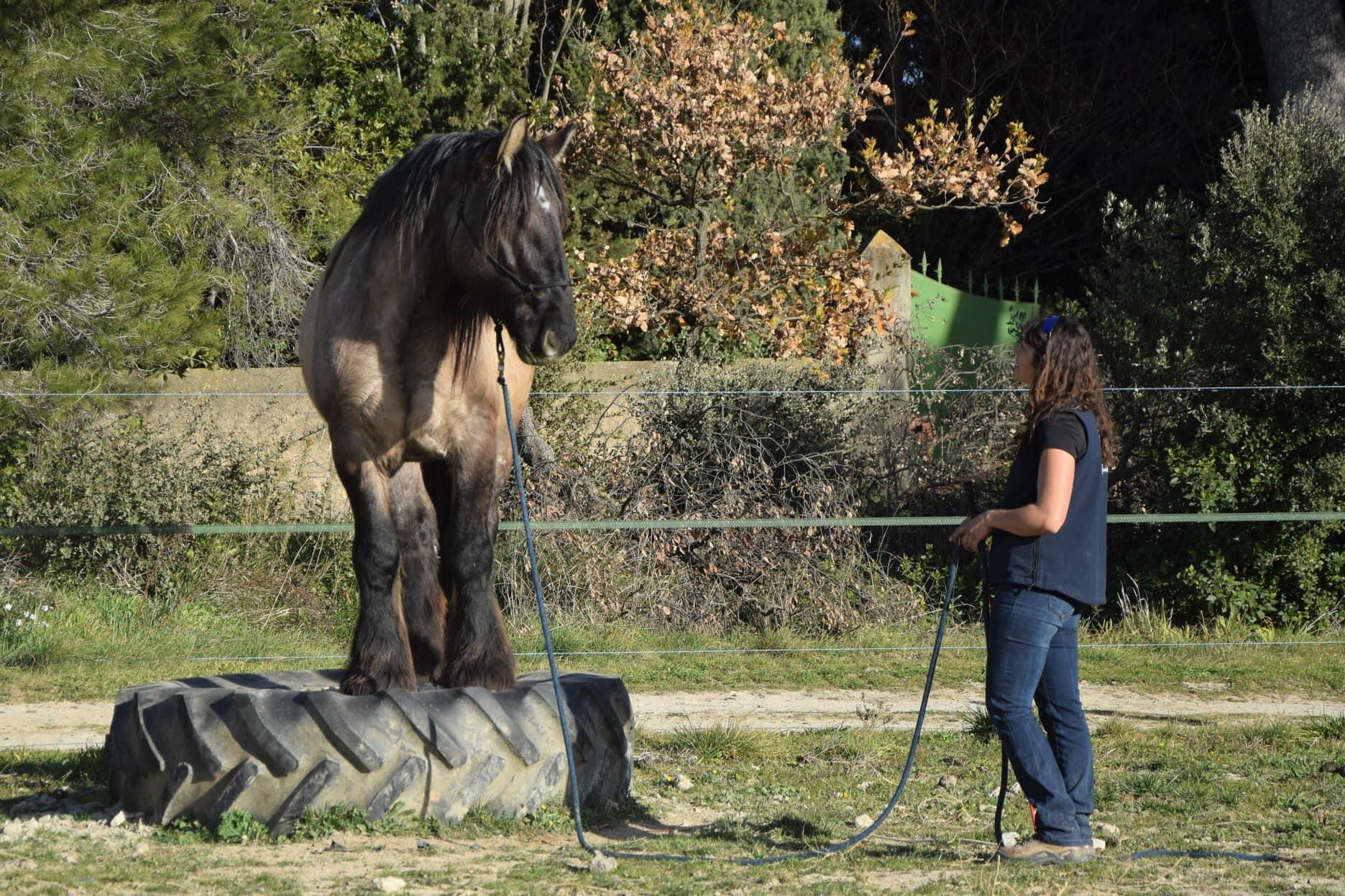 Le programme Parelli Natural Horsemanship