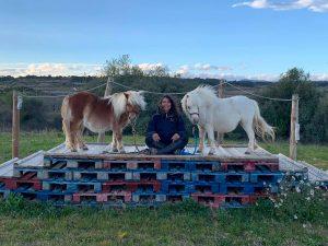L'exposition du cheval au stress