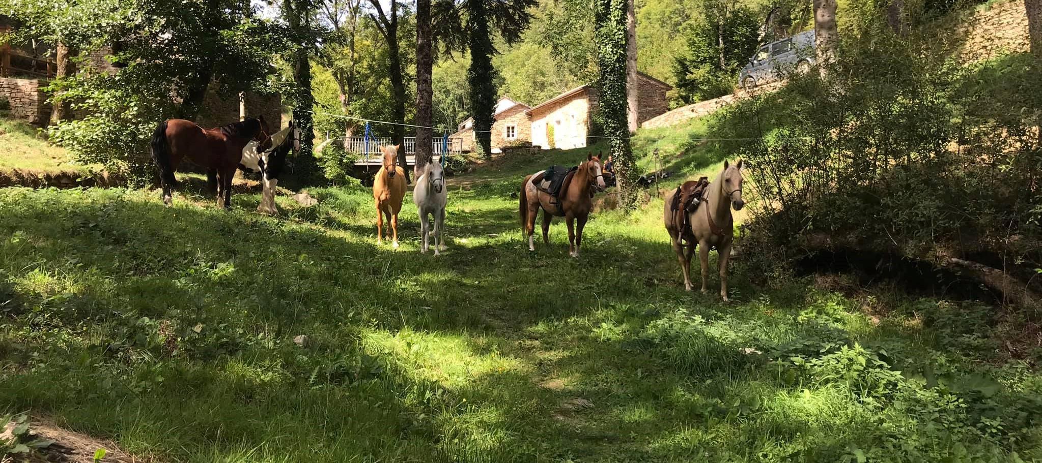 Read more about the article Attacher son cheval avec le licol corde