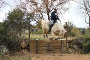 Read more about the article L'exposition du cheval au stress